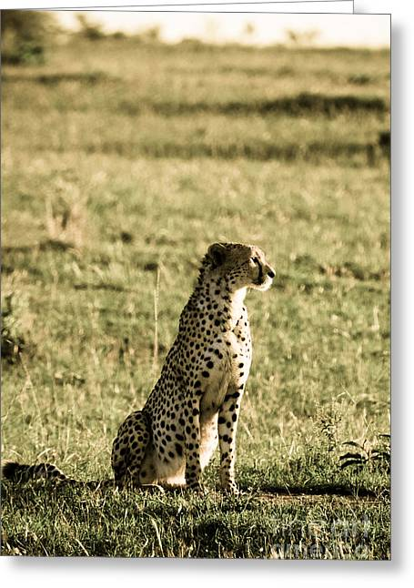 Out Of Africa Greeting Cards - The Look That Kills Greeting Card by Syed Aqueel