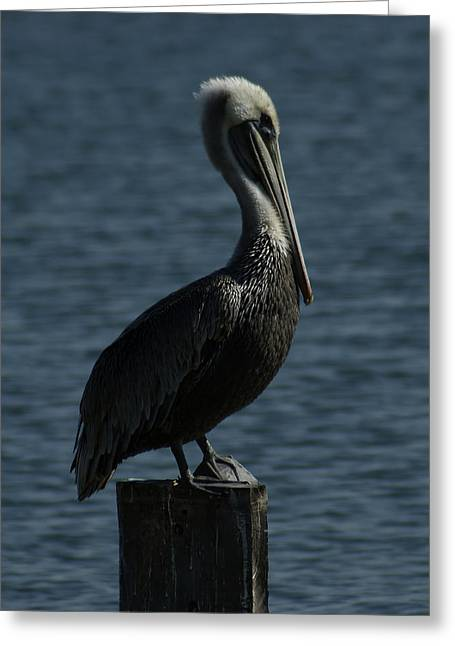 Pelican Greeting Cards - The Lookout Greeting Card by Ernie Echols
