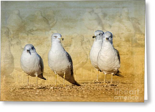 Ring-billed Gull Greeting Cards - The Lookouts Greeting Card by Betty LaRue
