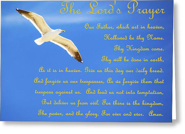 Water Fowl Greeting Cards - The Lords Prayer Seagull Greeting Card by Barbara Snyder