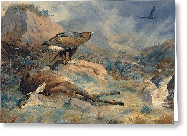 Mist Paintings Greeting Cards - The Lost Hind Greeting Card by Archibald Thorburn