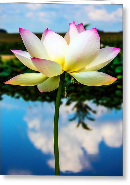 The Lotus Blossom Greeting Card by Jon Woodhams