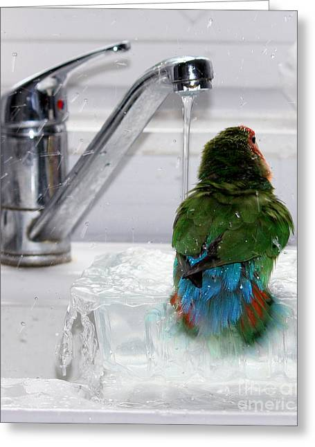 Coloured Greeting Cards - The Lovebirds Shower Greeting Card by Terri  Waters