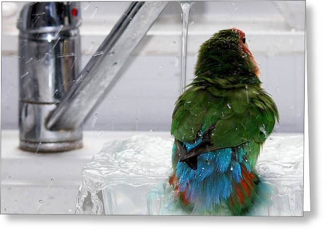 Rosy-faced Lovebird Greeting Cards - The Lovebirds Shower Greeting Card by Terri  Waters