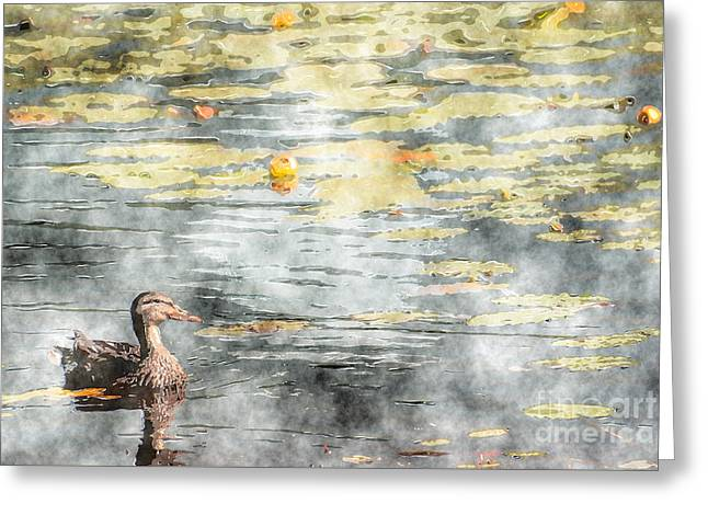 Aimelle Photographs Greeting Cards - The Lovely Pond Greeting Card by Aimelle