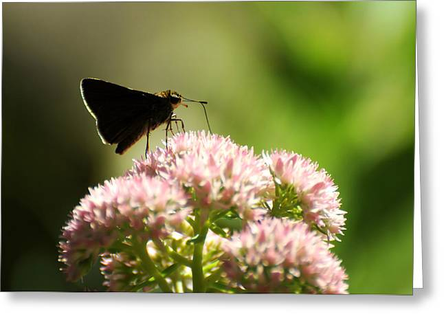 Lepidopterist Greeting Cards - The Lovers Gift Greeting Card by Rebecca Sherman