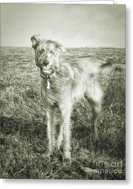 The Lurcher  Greeting Card by Rob Hawkins