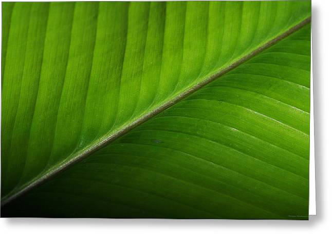 Schweitz Greeting Cards - The lush green diagonal line 1 Greeting Card by Philippe Meisburger