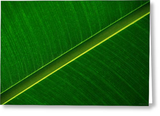 Schweitz Greeting Cards - The lush green diagonal line 2 Greeting Card by Philippe Meisburger