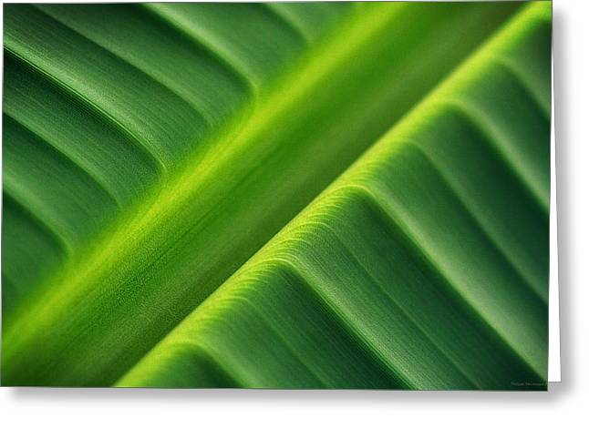 Schweitz Greeting Cards - The lush green diagonal line 4 Greeting Card by Philippe Meisburger