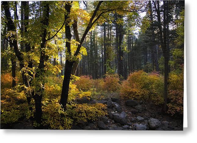 Oak Creek Greeting Cards - The Magic of Autumn   Greeting Card by Saija  Lehtonen