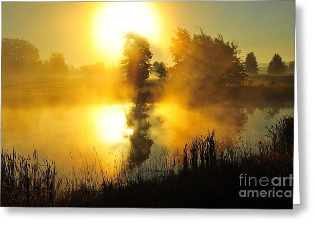 Gold Greeting Cards - The Magic of Nature 3 Greeting Card by Terri Gostola