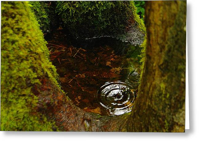 Puddle Greeting Cards - The Magic Of One Drop Greeting Card by Jeff  Swan