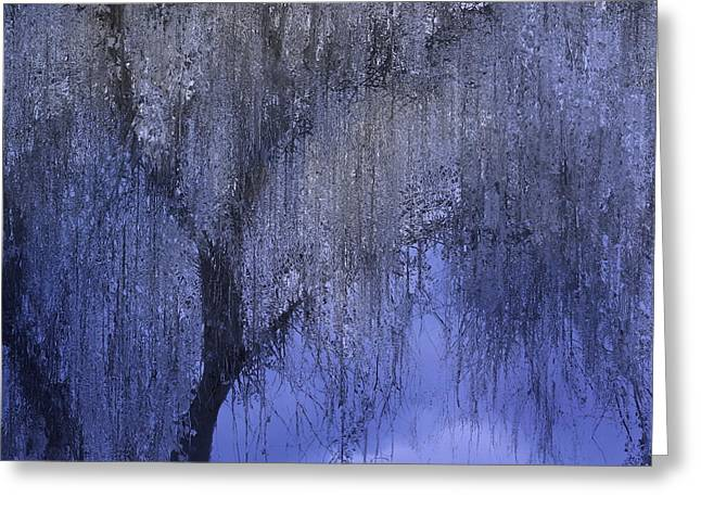 Abstract Style Greeting Cards - The Magic Tree Greeting Card by Kume Bryant