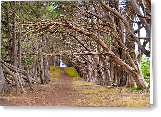 Half Moon Bay Greeting Cards - The Magic Trees Greeting Card by Amy Fearn