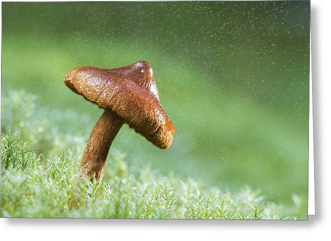 Fungal Greeting Cards - The magic umbrella Greeting Card by Mircea Costina Photography