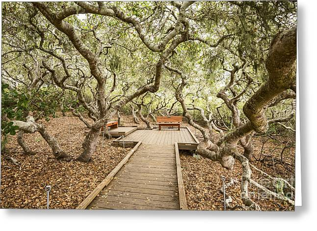 Wooden Platform Greeting Cards - The magical El Moro Elfin Forest. Greeting Card by Jamie Pham