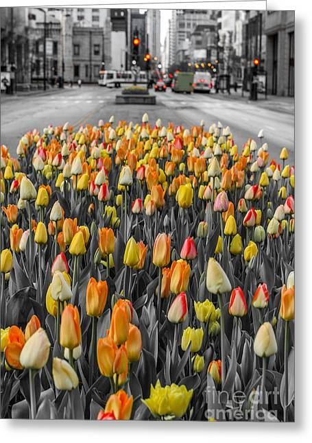 Magnificent Mile Greeting Cards - The Magnificent Mile Greeting Card by Melody Horn