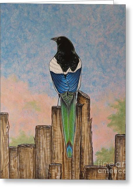 Black-billed Magpie Greeting Cards - The Magpie Greeting Card by Aimee Mouw