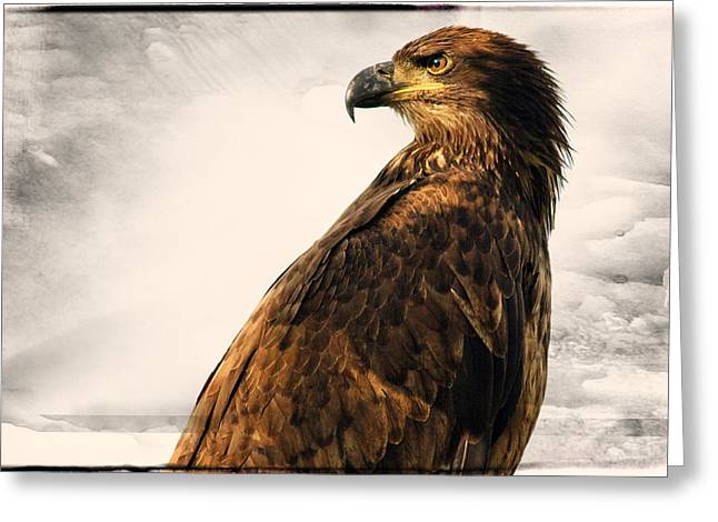 Eagle In Clouds Greeting Cards - The Majestc Eagle Greeting Card by Cheri Kanaan