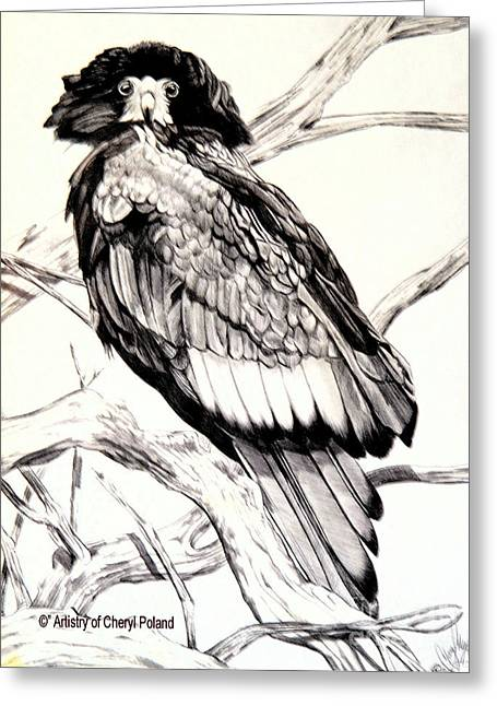 Stellar Drawings Greeting Cards - The Majestic Russian Stellar Eagle Greeting Card by Cheryl Poland