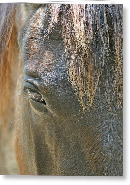 Forelock Photographs Greeting Cards - The Mane Eye Greeting Card by Bruce Gourley