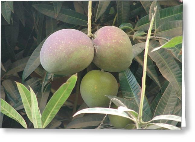 Mango Greeting Cards - The Mangoes Greeting Card by Djibril Ngawa BA