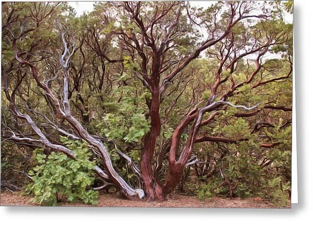 The Manzanita Tree Greeting Card by Heidi Smith