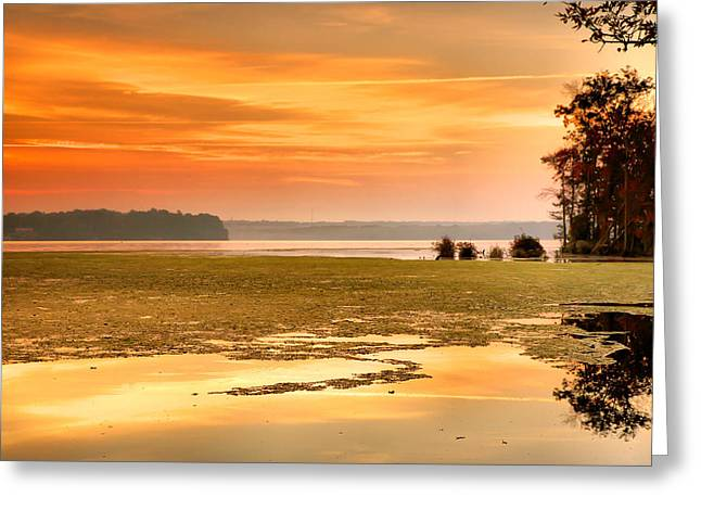 Wildlife Refuge. Greeting Cards - The Marsh At Daybreak II Greeting Card by Steven Ainsworth