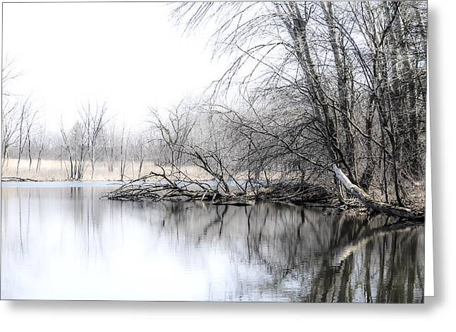 Nature Center Photographs Greeting Cards - The Marsh Greeting Card by Julie Palencia