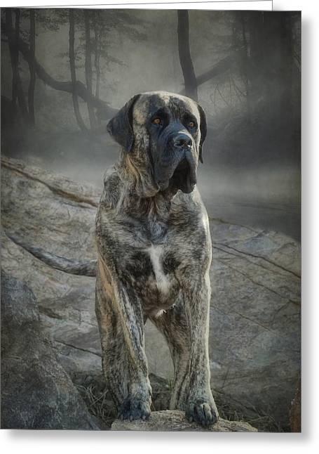 Guard Dog Greeting Cards - The Mastiff Greeting Card by Fran J Scott
