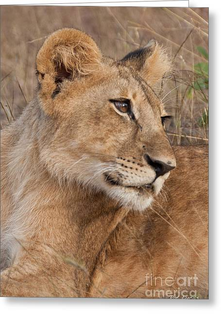 Zimbabwe Greeting Cards - The Matriarch Greeting Card by Pat Lucas