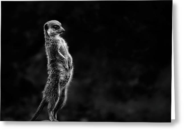 The Meerkat Greeting Card by Greetje Van Son