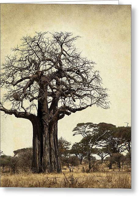 Large Trees Greeting Cards - THE MIGHTY BAOBAB TREE of LIFE Greeting Card by Daniel Hagerman