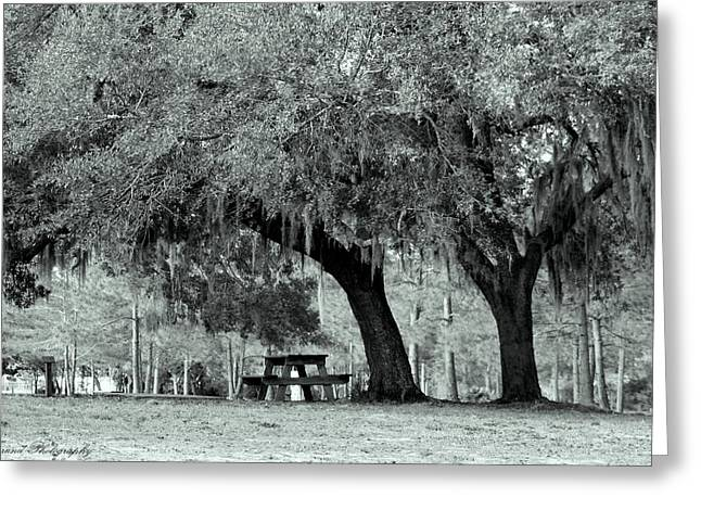 Fabled Greeting Cards - The Mighty Oak Greeting Card by Debra Forand