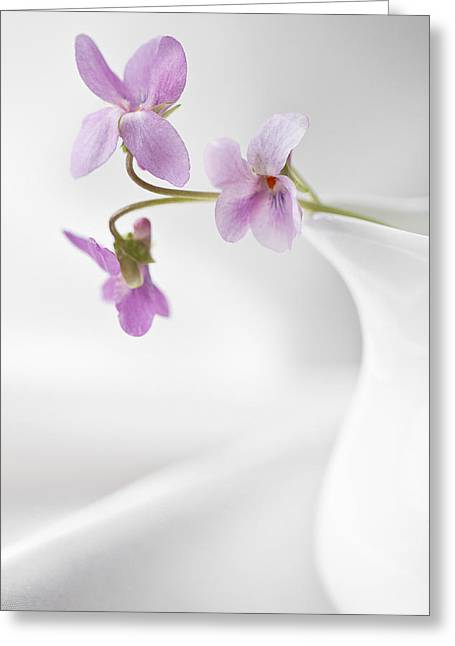 Grey Fine Art Greeting Cards - The Milk Jug Greeting Card by Constance Fein Harding
