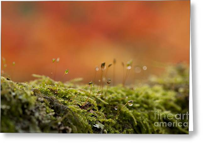 Selective Soft Focus Greeting Cards - The Miniature World of Moss  Greeting Card by Anne Gilbert