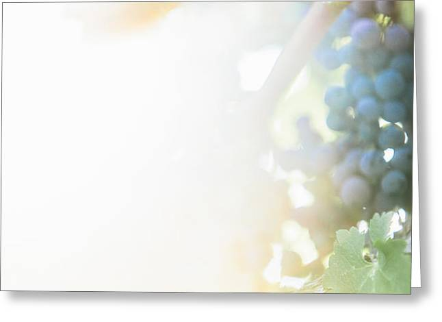 The Modern Grape 3 Greeting Card by Clint Brewer