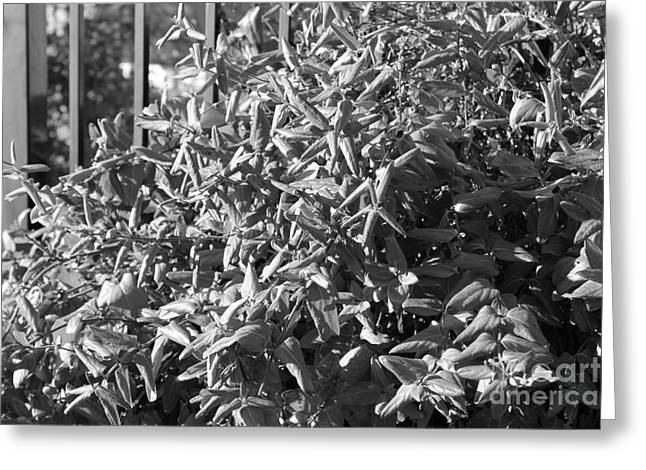 White Photographs Greeting Cards - The More Reserved Bush Greeting Card by Koko Lee