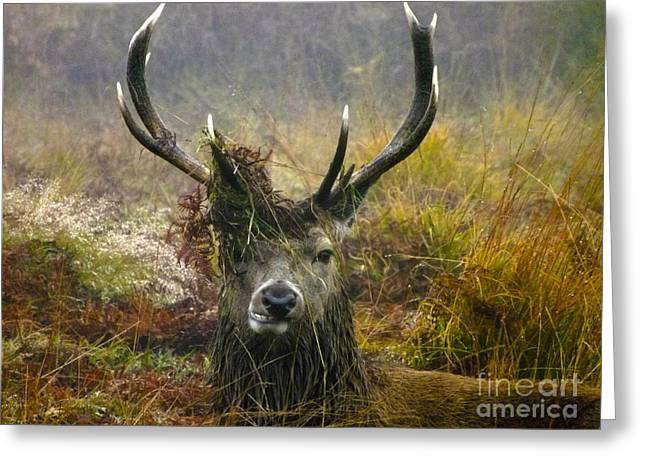 Park Scene Greeting Cards - Stag Party The Series The Morning After Greeting Card by Linsey Williams