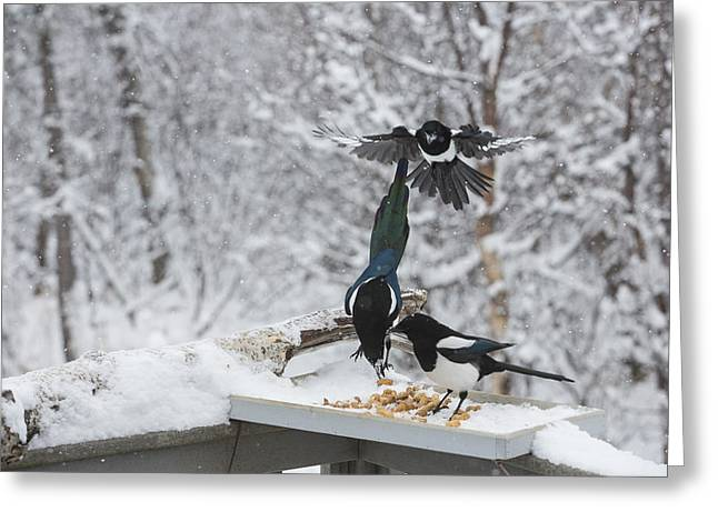 Magpies. Snow Greeting Cards - The Morning Rush Greeting Card by Tim Grams