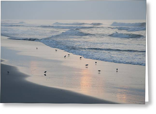 Sand Piper Greeting Cards - The Morning Surf Greeting Card by Bill Cannon
