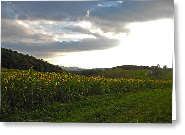 Sunflower Patch Greeting Cards - The Mountain and Her Flowers Greeting Card by Kari Watson