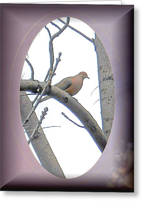Patricia Keller Greeting Cards - The Mourning Dove Greeting Card by Patricia Keller