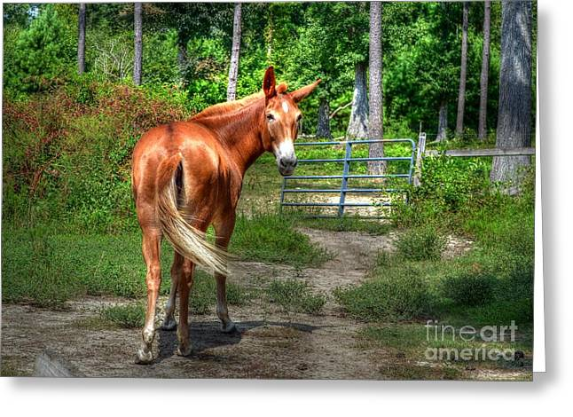 The Mule Greeting Card by Kathy Baccari