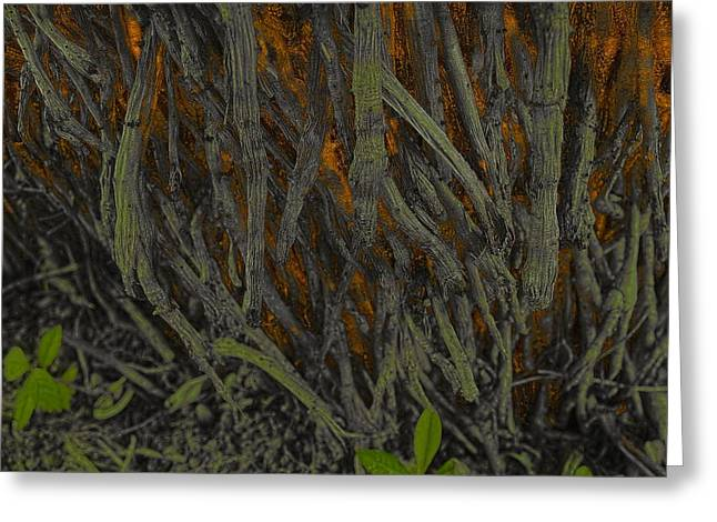 The Mystery of Surface Roots Greeting Card by Sandra Pena de Ortiz