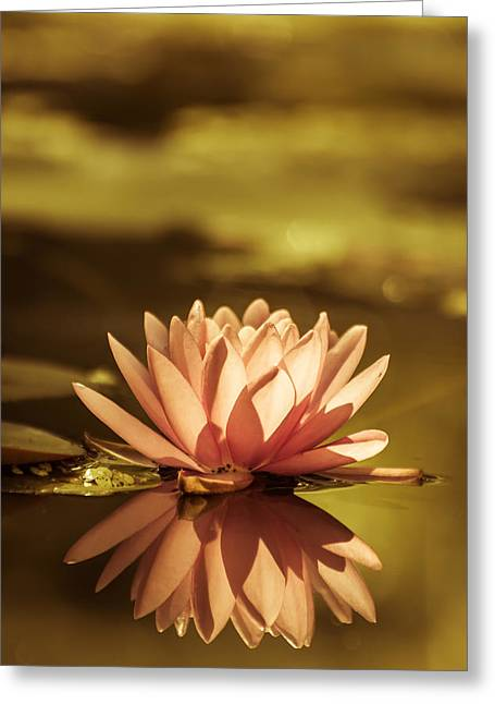 Flower Photos Greeting Cards - The narcissist Greeting Card by Carole Dubuc