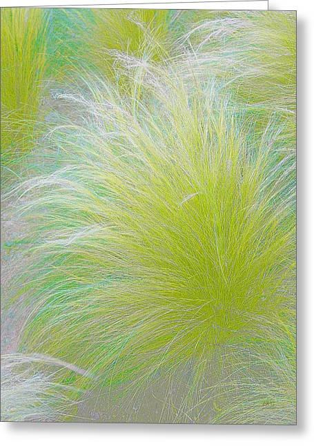 The Nature Of Grass   Greeting Card by Ben and Raisa Gertsberg