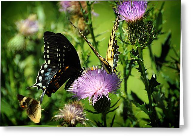 Common Tiger Butterfly Greeting Cards - The Nectar Seekers Greeting Card by Rebecca Sherman