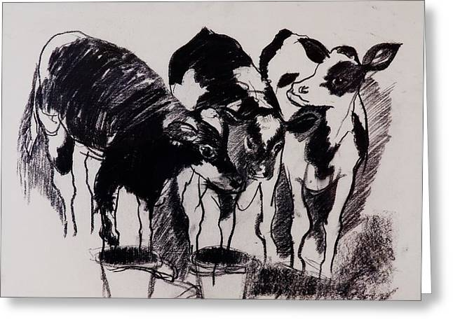 Calf Photographs Greeting Cards - The New Calves Charcoal On Paper Greeting Card by Brenda Brin Booker